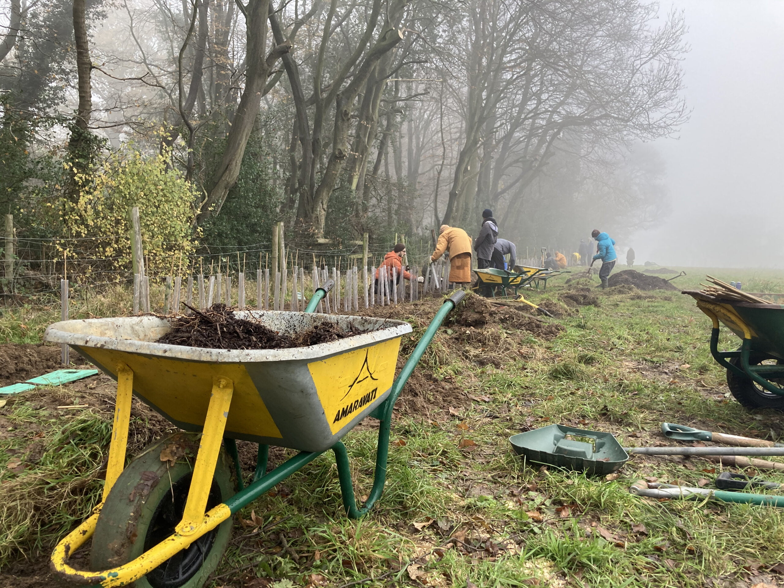 2020.12.02 Hedge's Planting